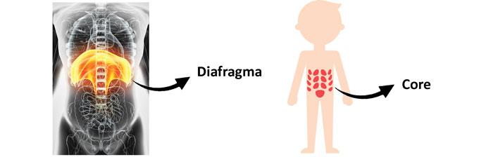 A Importância da Respiração: Diafragma x Core
