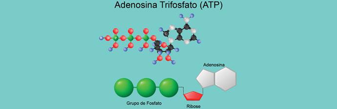 Fisiologia do Exercício: ATP