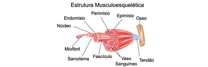 Estrutura Musculoesquelética