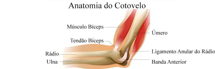 Anatomia do Cotovelo