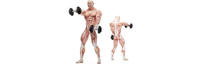 Biomecânica da Musculação: Exercícios Resistidos