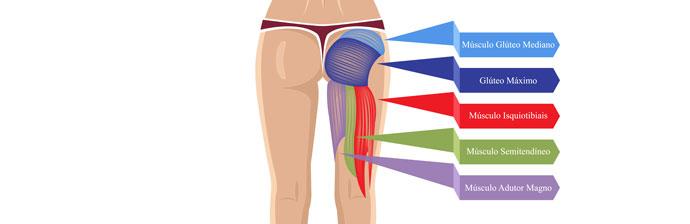 Anatomia do Glúteo