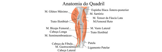 Musculatura do Membro Inferior: Quadril
