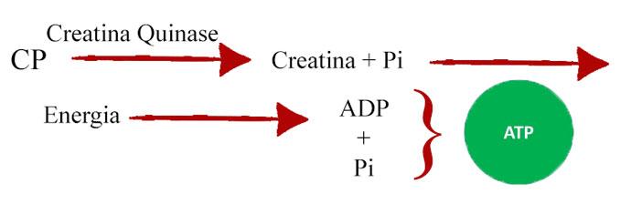 Figura 2 - Metabolismo