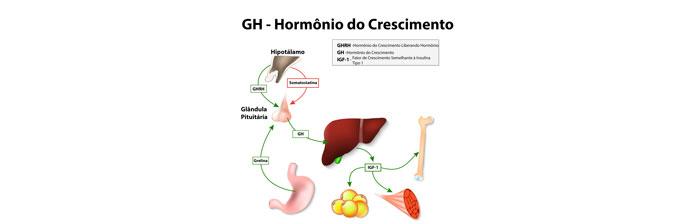 O papel do GH (Hormônio de Crescimento)
