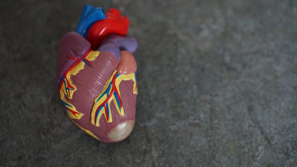 coração-jejum-intermitente.